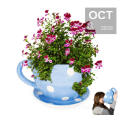 A huge teacup plant pot gift for green fingers