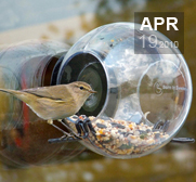 The window mounted bird feeder gift