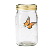 The butterfly in a jar gift