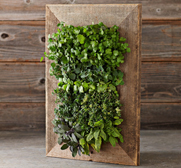 The reclaimed barndoor wall planter gift