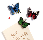 The butterfly pushpin collection gift by Amidov