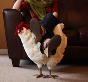 Little Betty the chicken footstool gifts by the citygirlfarm