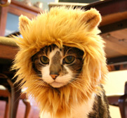 The Lion hat for cats gift