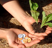 Seed money coin gifts to plant by Leafcutter Designs