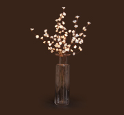 The white flower light gift